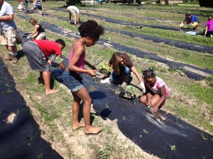 Entire families, friends and neighbors helped put plants in the fertile Detroit soil.
