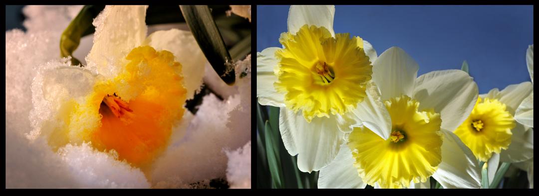 Michigan - winter into spring