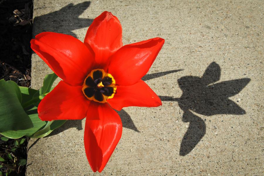 Ah, Spring - tulip LOW REZ
